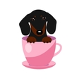 cute Dachshund dog in pink teacup vector image vector image
