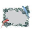 red blue macaw bird and tropical green leaf vector image