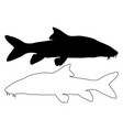 silhouette of barbel fish vector image