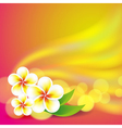 Frangipani flowers on colorful background vector image