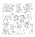 grape bunch collection elements grapes vector image