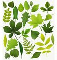 Tree leaves vector image