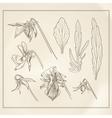 Botanical flowers vintage vector image