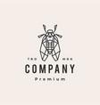 cicada hipster vintage logo icon vector image