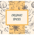 Hand drawn set of organic spices vector image vector image