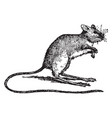 jumping mouse vintage vector image vector image