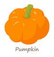 pumpkin icon isometric style vector image