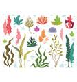 seaweeds sea underwater plants ocean coral reef vector image vector image