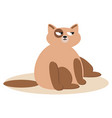 sitting cute cats cat brown cat vector image vector image