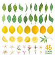 watercolor elements lemons leaves and flowers vector image vector image