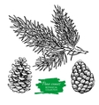 hand drawn botanical Pine cone and branch vector image