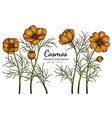 orange cosmos flower and leaf drawing with line vector image vector image