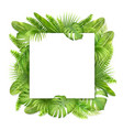 square card with tropical leaves vector image vector image