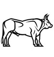 powerful horned bull vector image