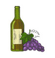 bottle of wine and grapes color sketch engraving vector image