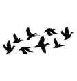 flock ducks a cartoon flock birds vector image vector image