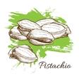 hand drawn Pistachios vector image