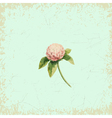 Clover flower on vintage background watercolor vector image