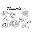collection plumeria flower and leaves vector image vector image