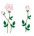 rose with buds contour vector image