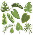 Set leaves tropical plants collection of