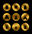 black insects silhouette on golden rounds vector image