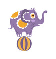 cute cartoon elephant character standing on a ball vector image vector image