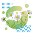 summer art poster with chamomile flowers and vector image