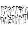 herb and field flowers silhouette set vector image