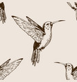 humming bird seamless pattern engraving vector image vector image