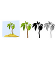 tropical palm trees of a palm tree vector image vector image