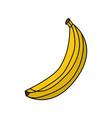 banana delicious fruit vector image vector image