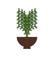 plant in a flowerpot vector image vector image