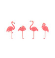 set flamingos isolated on white background vector image vector image