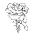 flower sketch vector image