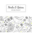 herbs and spices banner template with natural vector image vector image