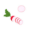 red radish with green leaves sliced isolated on vector image vector image