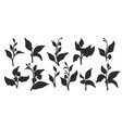 silhouette set branches vector image vector image