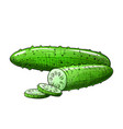 sliced cucumber vector image