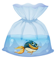 A fish inside a plastic pouch vector image vector image