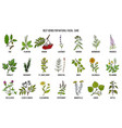 best medicinal herbs for natural facial care vector image vector image