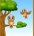 cute owl cartoon on a tree branch vector image