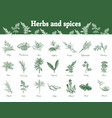 herbs and spices set hand drawn vector image vector image