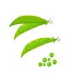 set green peas isolated on white background vector image vector image