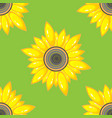 summer seamless pattern with sunflower vector image vector image