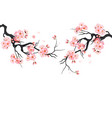 japanese cherry sakura tree isolated background vector image
