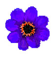 pixel field flower isolated on vector image vector image