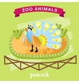 Zoo Animal Peacock vector image vector image