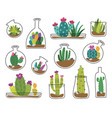 cute cactus and succulent vector image vector image