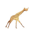 unusual mixture animals giraffe with a rhinoce vector image